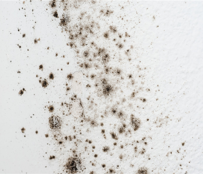 Black spots of mold on a wall